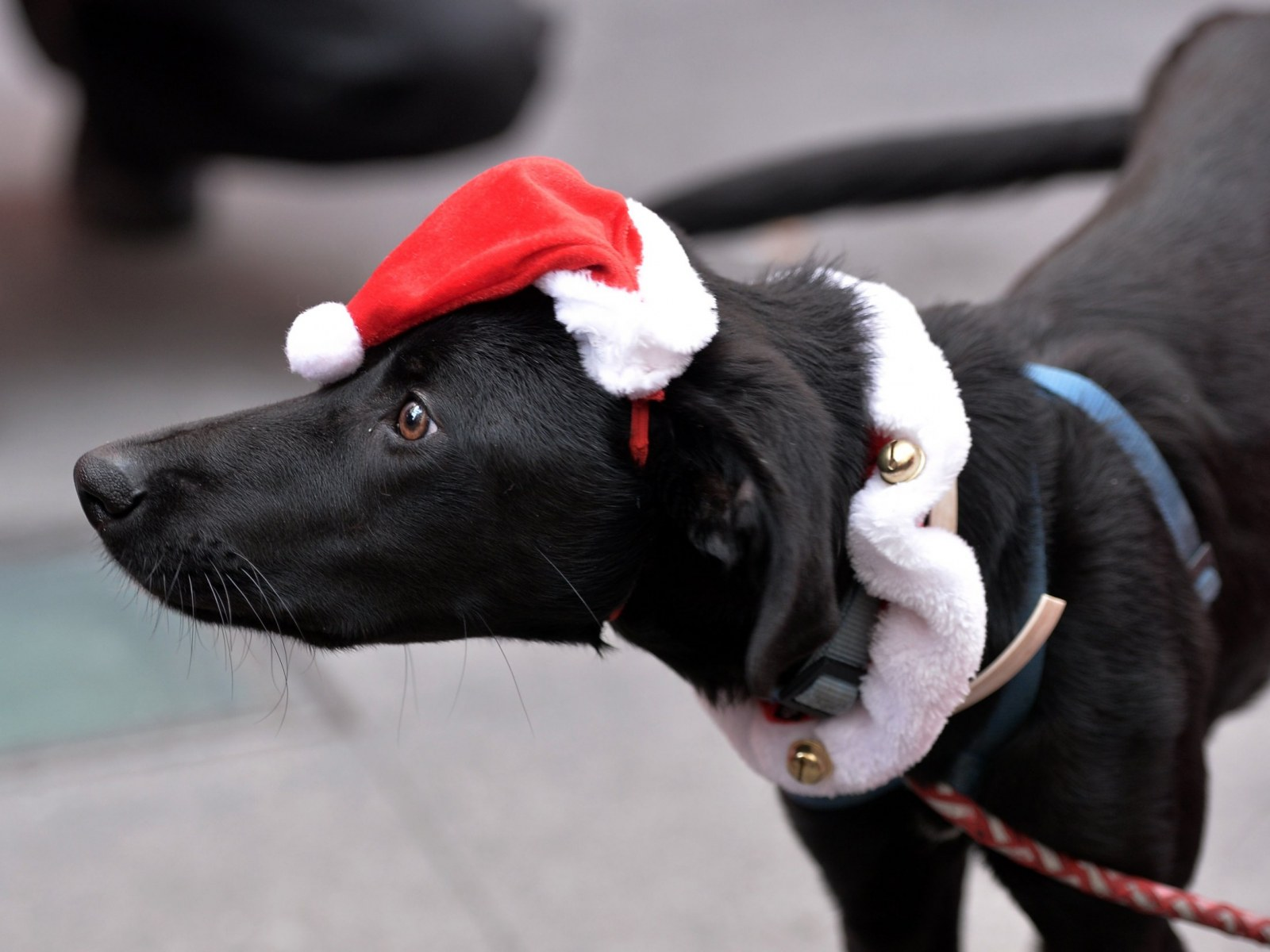 Twas the Night Before Christmas…Rescue Style