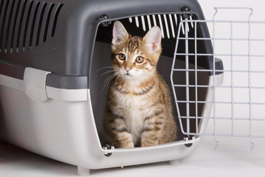 croton-animal-hospital-admissions