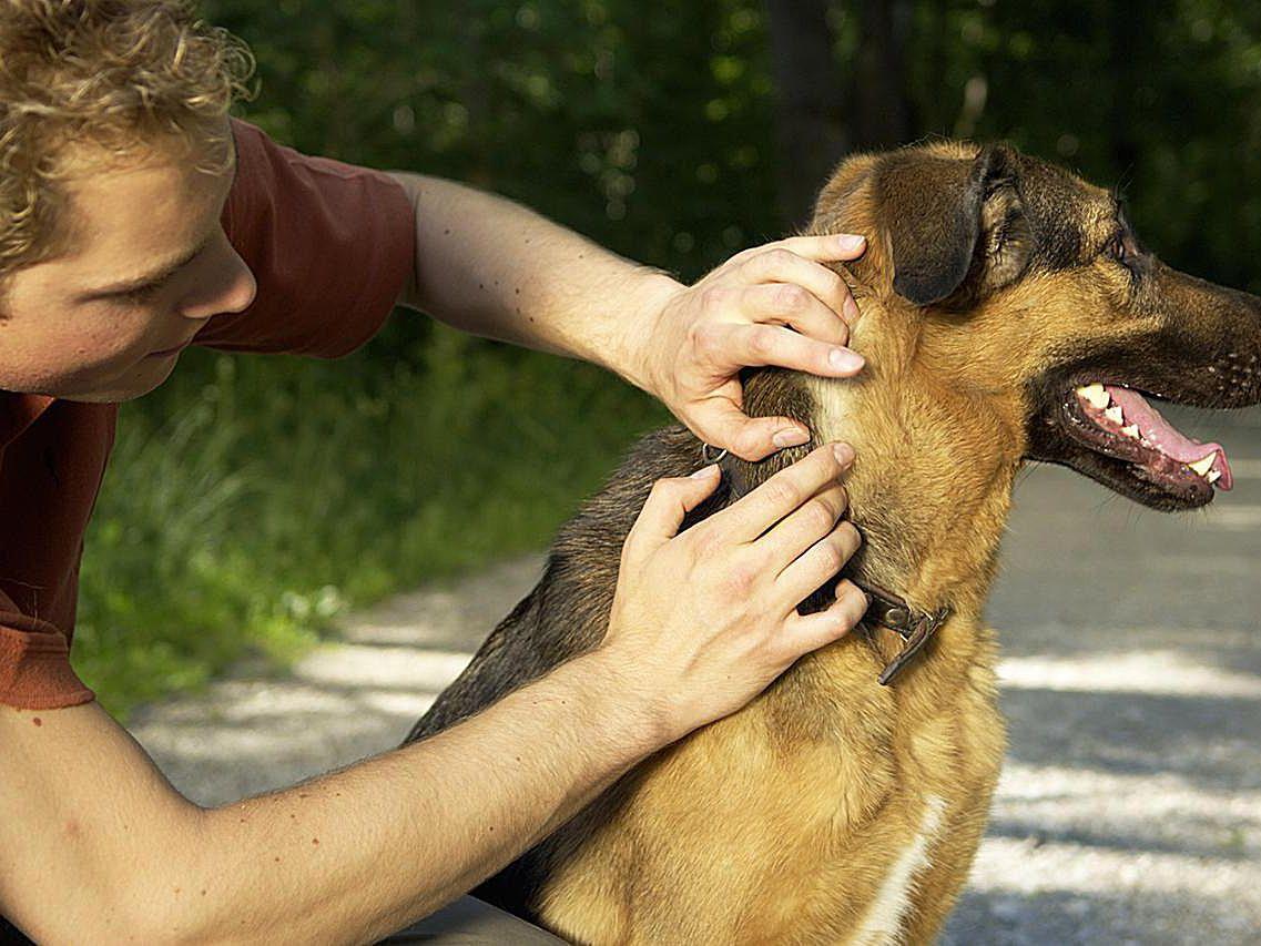 Intruder Alert: Longhorned Tick in Westchester County